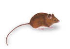 Get rid of field mice
